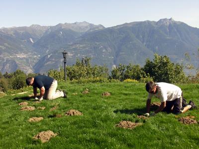 Chasseur de taupe en suisse romande